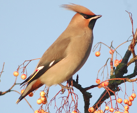 January Bird Sighting Review