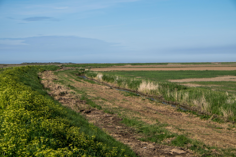 Deepdale Marsh – The Burnhams – Norfolk's undiscovered walks